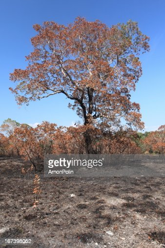 wildfire : Stock Photo