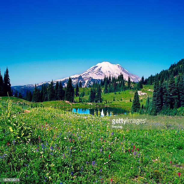 Wildflower Field and Mount Rainier, Washington