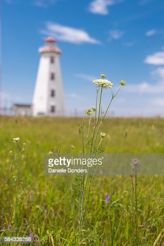 Wildflower meadow in front of North Cape Lighthouse on Prince Edward Island