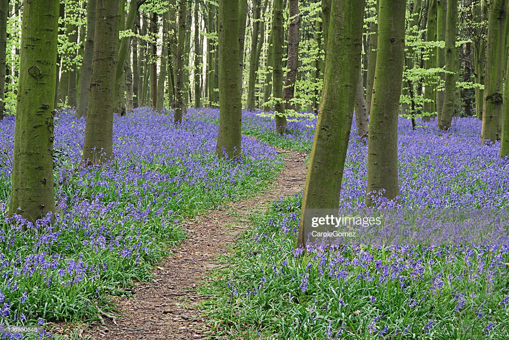 Wildflower Path : Stock Photo