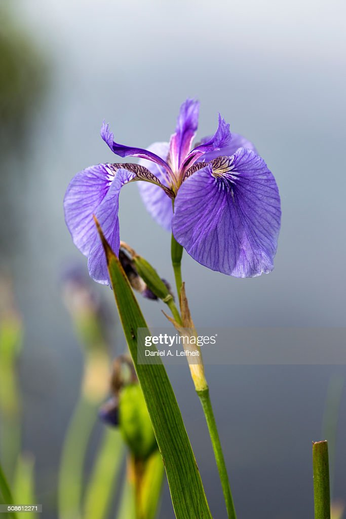 Wildflower : Stock Photo