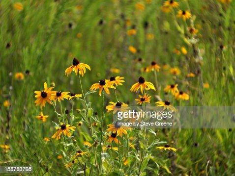 Wildflower World