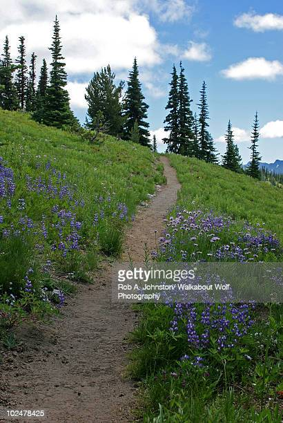 Wildflowers and hiking trail