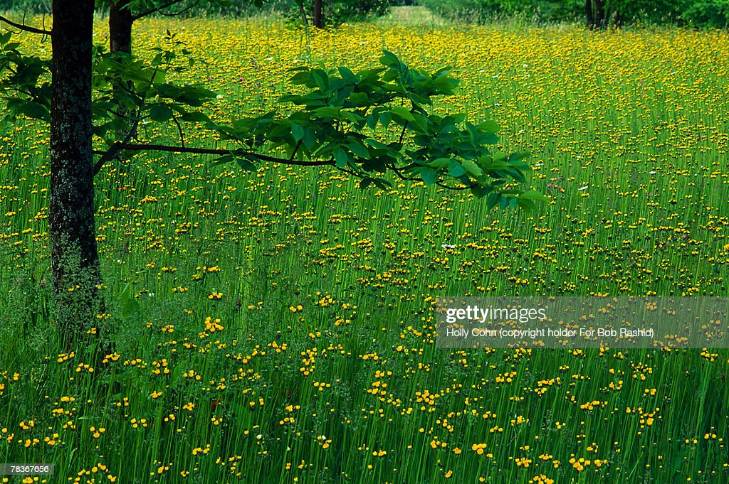 Wildflowers and tall grass : Stock Photo