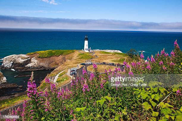 wildflowers and yaquina head lighthouse