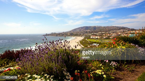 Wildflowers at the Southern California coastline