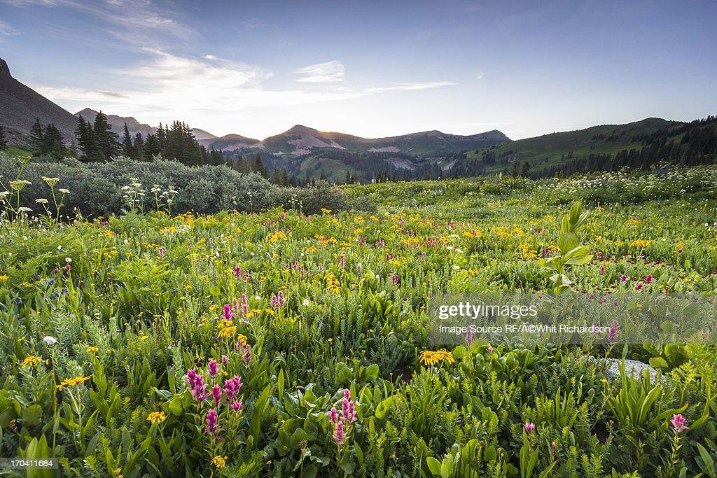 Wildflowers growing in rural field