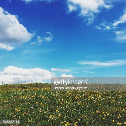 Wildflowers Growing On Field Against Sky