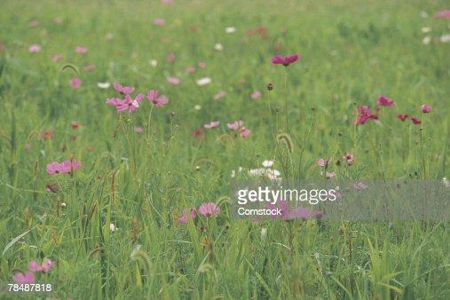Wildflowers in a field : Stock Photo