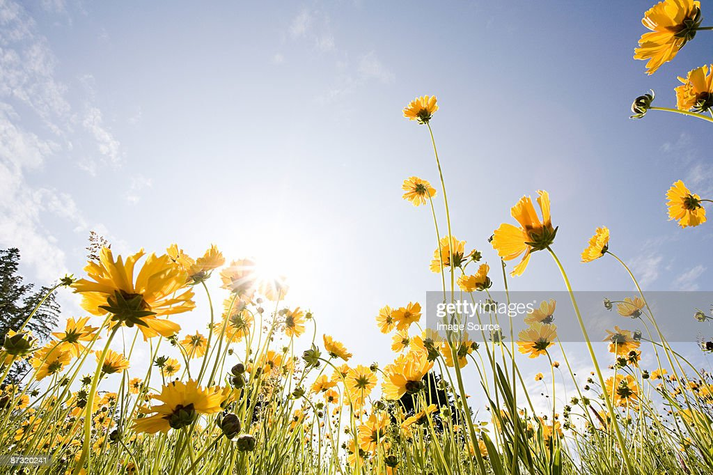 Wildflowers : Stock Photo