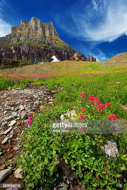 Wildflowers & rugged mountain, summer, Glacier MT