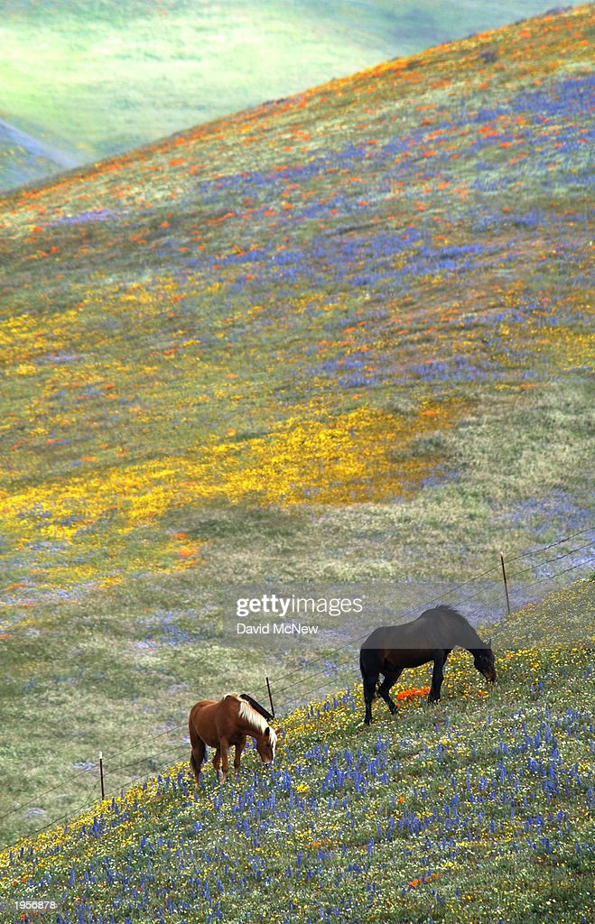 Wildflowers Signal Comeback from Drought and Fires : Stock Photo