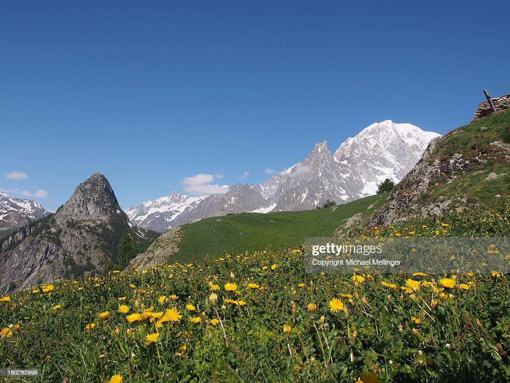 Wildflowersmont blanctour de mont blanc stock photo for Belle jardin blanc de blancs