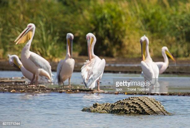 Wildlife at Lake Chamo, Ethiopia