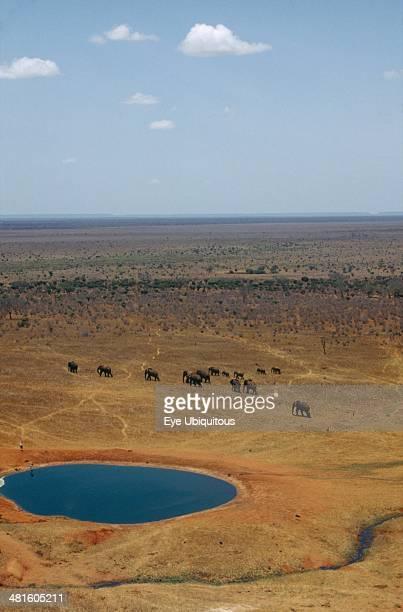 Wildlife Big Game Elephants African Elephant Herd walking on dry savannah away from watering hole in Tsavo Kenya