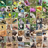 Wildlife collage with many endangered species,
