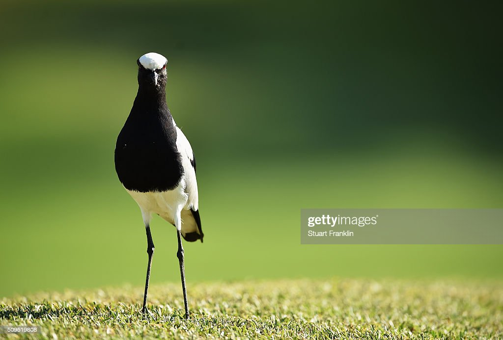 Wildlife during the first round of the Tshwane Open at Pretoria Country Club on February 11, 2016 in Pretoria, South Africa.