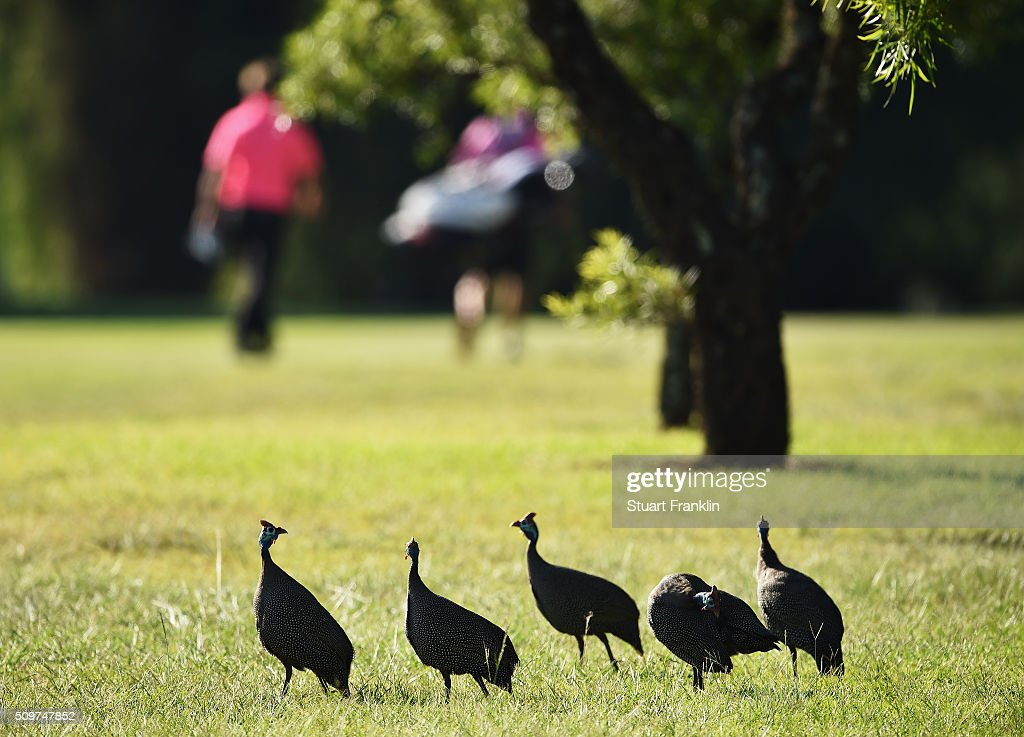 Wildlife look on as a golfer and caddie walk by during the second round of the Tshwane Open at Pretoria Country Club on February 12, 2016 in Pretoria, South Africa.