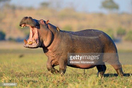 Wildlife of Chobe Natiobal Park