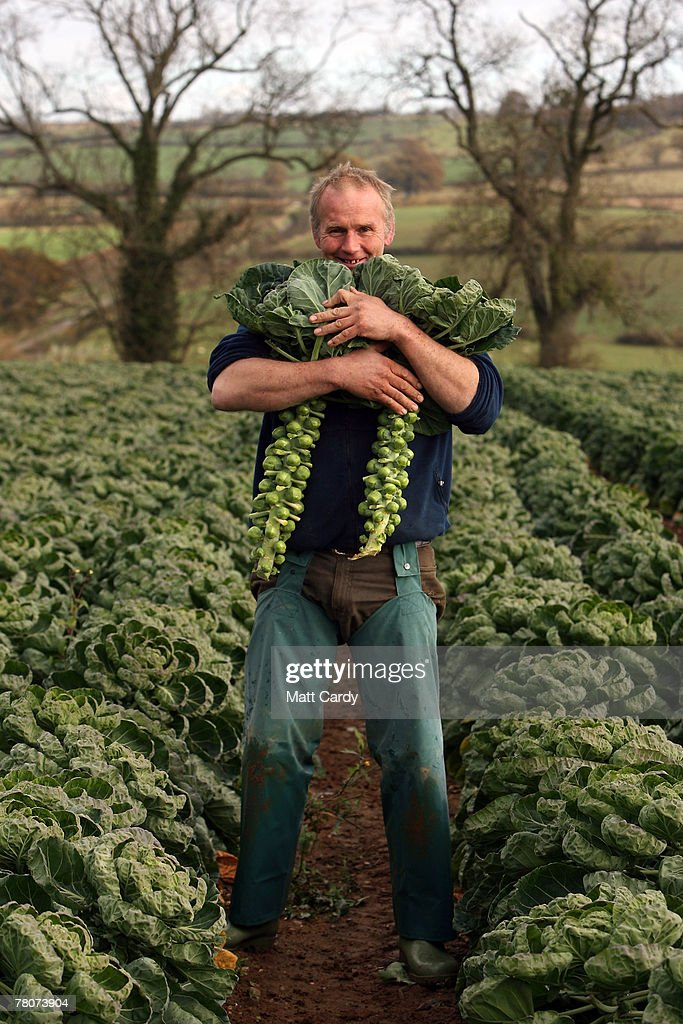 William Haines, a sprout farmer at Castle Farm, Chipping Campden stands in his field full of sprouts he is growing for Christmas on November 9 2007 in Gloucestershire, England. Sprouts and other vegetables are expected to be scarce this festive season after the summer floods left thousands of acres of crops rotting in fields, creating shortages which are now pushing up prices to shoppers.