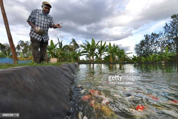 William Kiarie feeds goldfishes at his Green Algae Highland fish's farm on April 28 Sagana Kirinyaga county central Kenya This project is a...