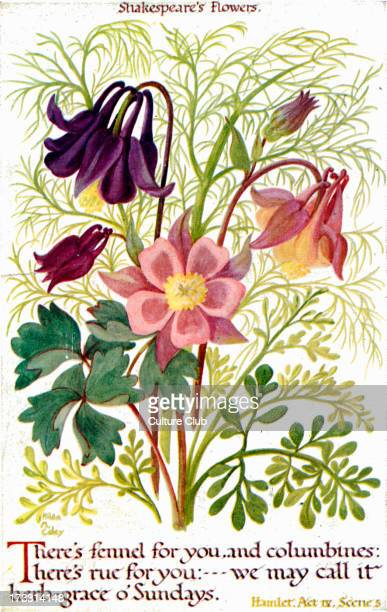William Shakespeare 's flowers 'There's fennel for you and columbines here's rue for youwe may call it herbgrace o' Sundays' Hamlet Act IV scene 5...