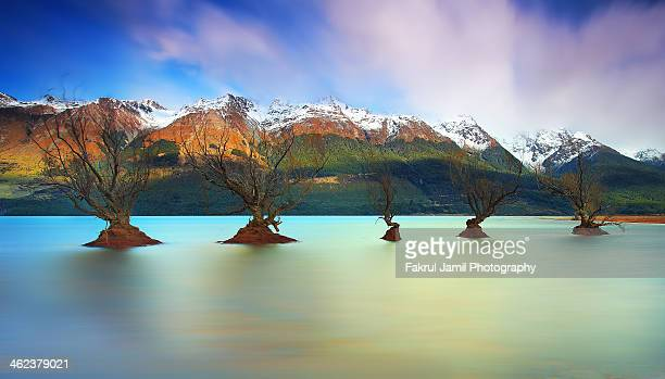 Willow Trees of Glenorchy