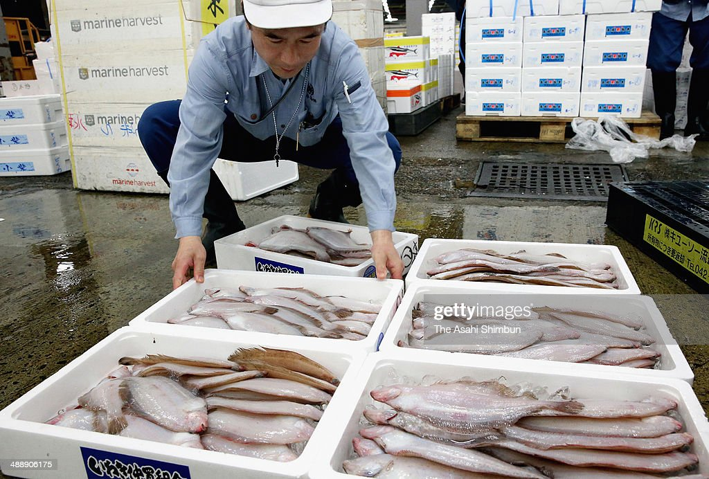 Willowy flounder caught off Iwaki, Fukushima Prefecture, are traded at the Tsukiji fish market on May 9, 2014 in Tokyo, Japan. Fishery products from Iwaki were traded for the first time since the disaster began to unfurl at the Fukushima Daiichi nuclear power plant in March 2011. Before being put up for auction, the fishery products underwent voluntary checks for radioactivity levels by the Iwaki city fishery association and other parties.