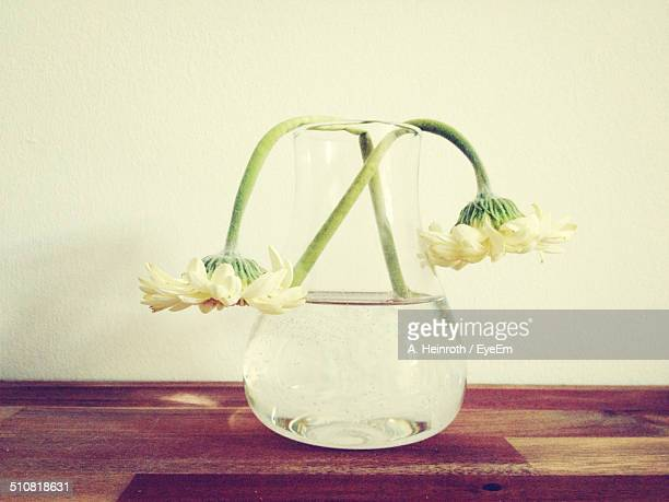 Wilted flowers in vase