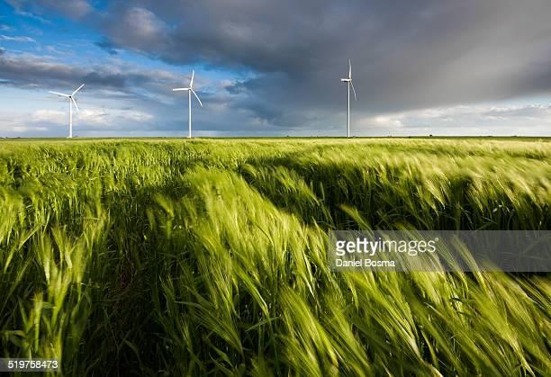 Wind blowing through field of grain