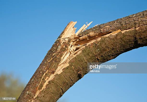 wind damaged branch