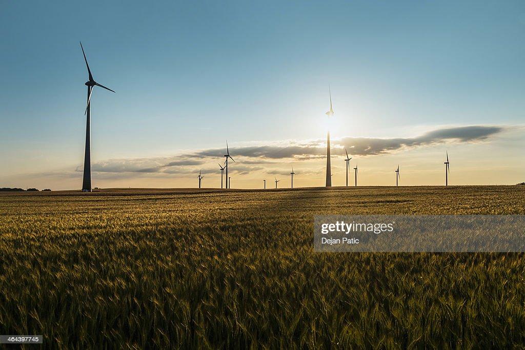 wind farm in a wheat field in sunset backlight