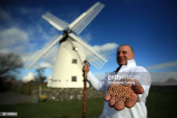 Wind Miller Lloyd Jones poses outside Melin Llynnon windmill with a handful of wheat where he mills wheat and seed in the traditional way on 7 March...