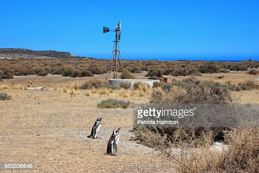 wind powered water pump valdes peninsula stock photo getty images