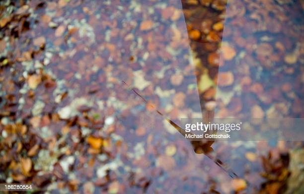 A wind turbine Enercon 101 is refected in a puddle filled with autumn leaves in the forest Brenntenberg on October 29 2013 in Markt Beratzhausen...