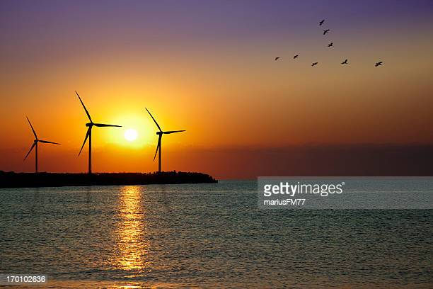 Wind turbine farm in sunset