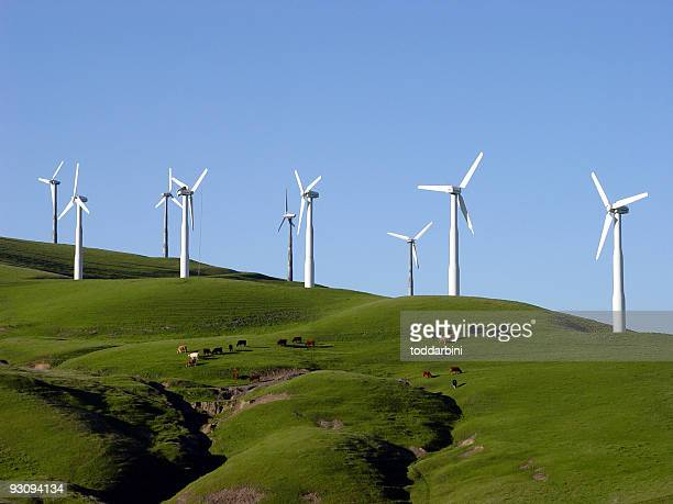 Wind Turbines and Cattle Pasture in California