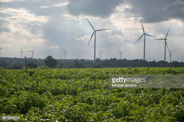 Wind turbines generating electricity. energy conservation concept