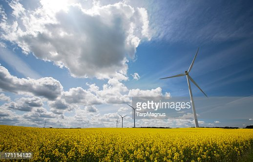 Wind turbines in a field with a cloudy blue sky