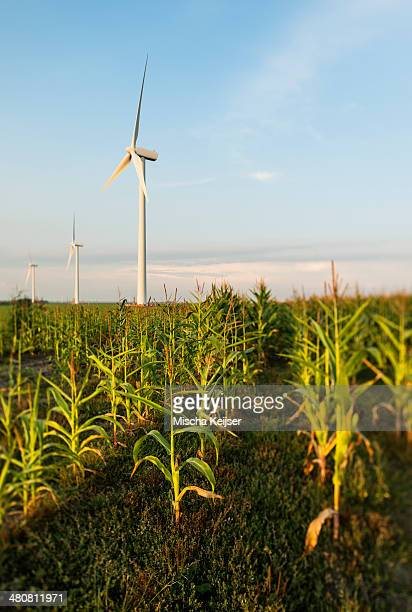 Wind turbines in agricultural field, Almere, Flevoland, Netherlands