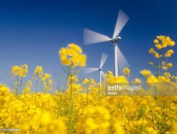 Turbinas eólicas en amarillo campo.  La energía sostenible.  Polarizado cielo azul.