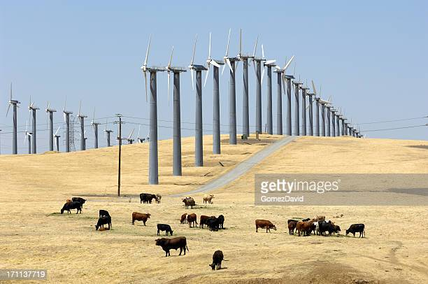 Wind Turbines Lined Up Along Hill