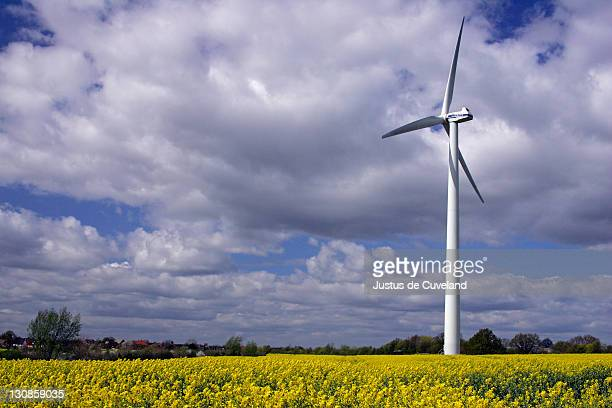 wind wheel in a flowering rape field - Schleswig-Holstein, Germany, Europe