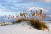 """Wind-blown sand dunes at Gulf State Park, Alabama."""