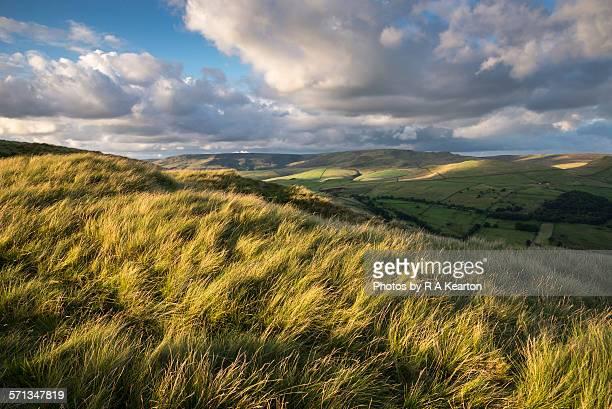 Windblown moorland grasses, Derbyshire, England