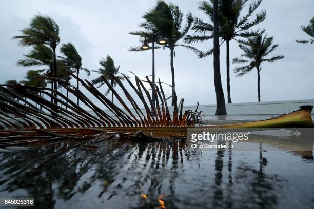 Windblown palm fronds litter the street along Sebastian Street Beach ahead of the arrival of Hurricane Irma September 9 2017 in Fort Lauderdale...