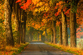 Winding Country Road in Autumn.North Poland.