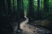 Image of a winding forest trail.