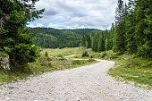 Unpaved Winding Mountain Road Through A Forest on a Cloudy Day