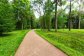 Winding Path through a tranquil verdant park with lawn and tall green trees in summer day for walking and relaxing and breathing clear air
